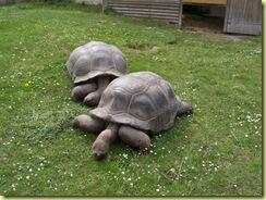 2010.04.27-033 tortue géante