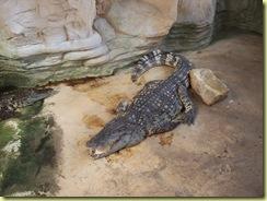 2010.04.27-042 crocodile du Siam