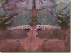 2010.04.27-022 gecko léopard