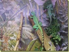 2010.04.27-024 basilic vert