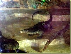 2010.04.27-032 varan géant malais