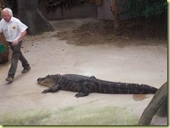 2010.04.27-045 nourrisage des crocodiles